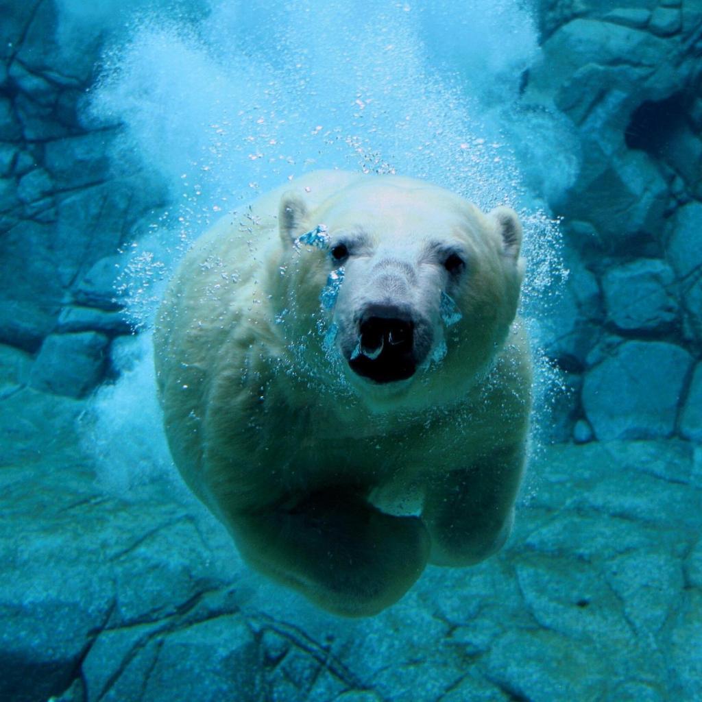 熊の魚眼レンズの動物壁紙