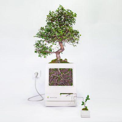 クラシックMacと植物で美しくリサイクルwww